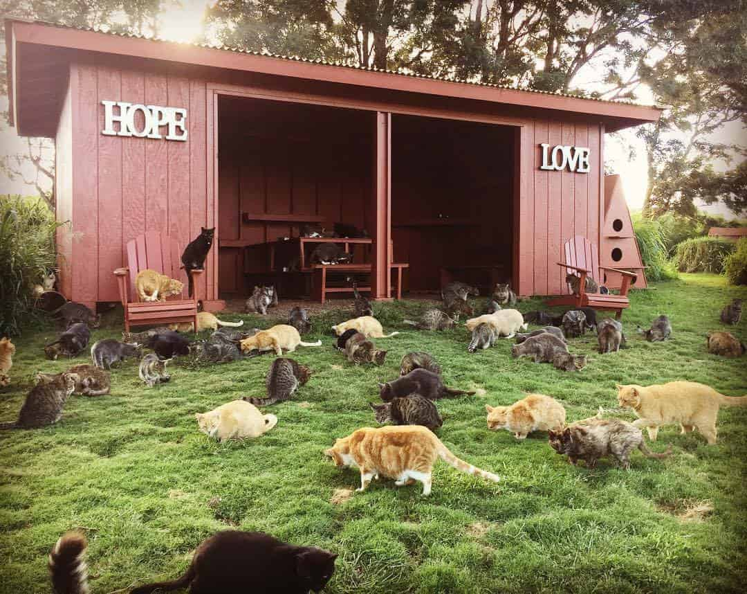 Lanai Cat Sanctuary, Lanai
