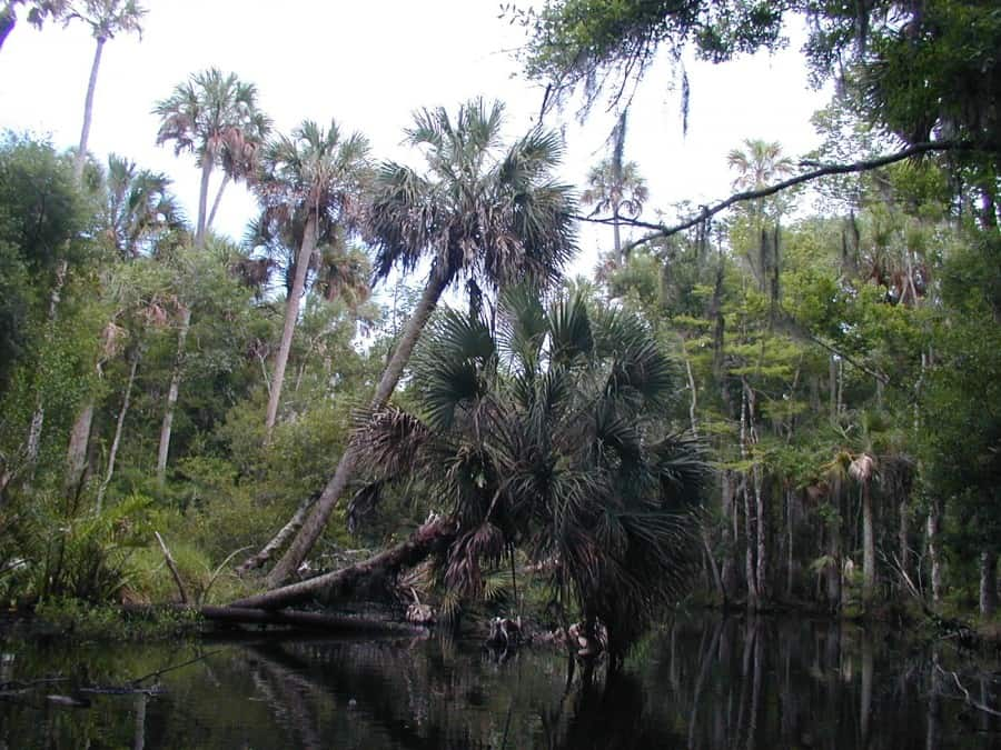 Tomoka Marsh State Aquatic Preserve