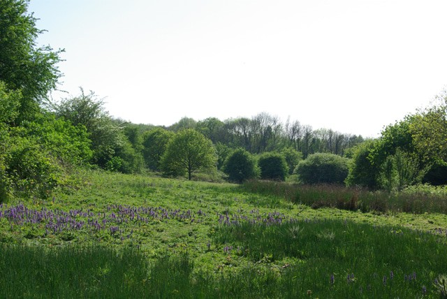 Marline Valley Nature Reserve