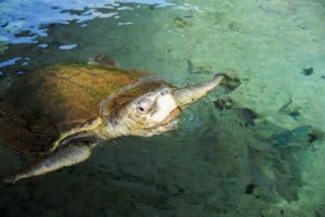 Turtle at Gumbo Limbo Nature Center