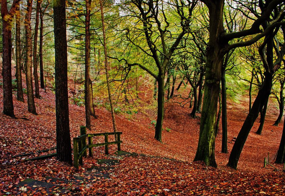 Tandle Hill Country Park