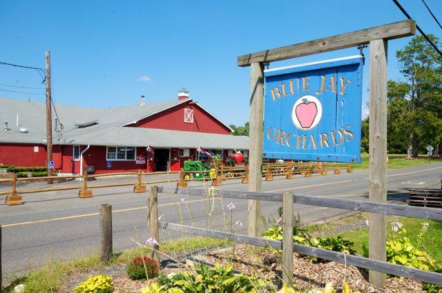 Blue Jay Orchards