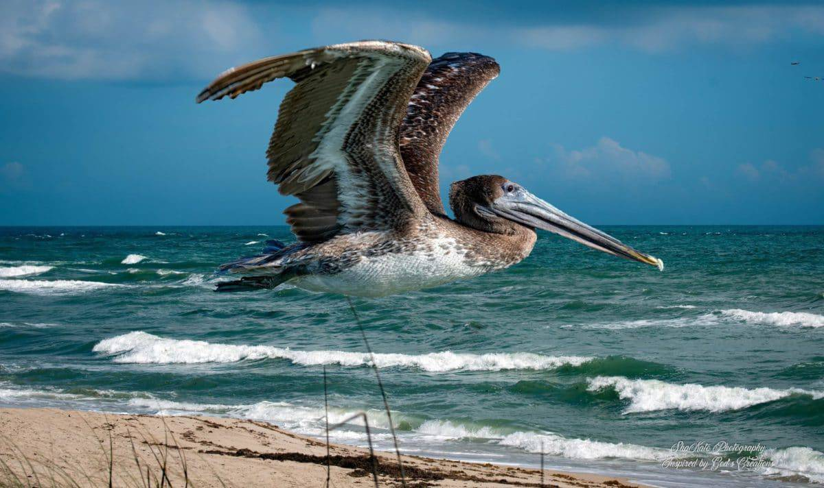 Pelican Island National Wildlife Refuge