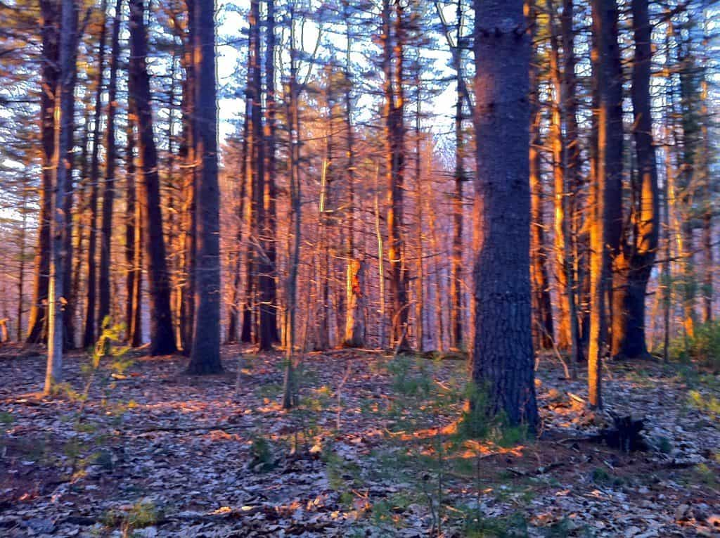 Mansfield Hollow State Park