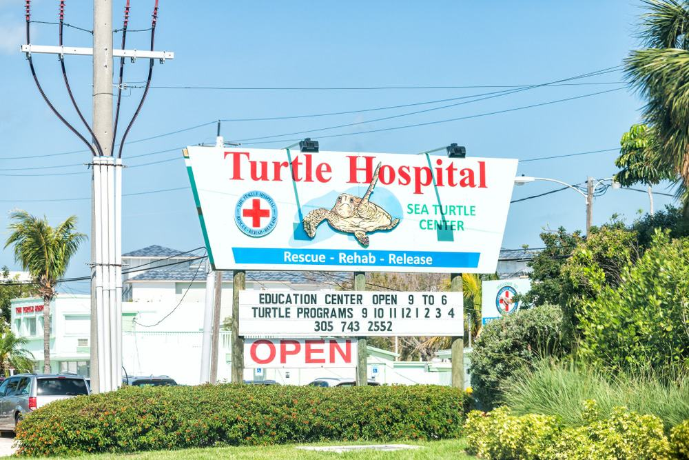 Turtle Veterinary Hospital