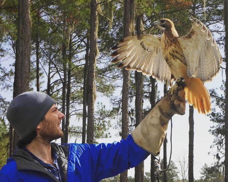 International Falconry Academy