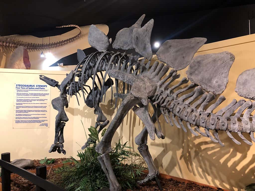 Museum of Western Colorado – Dinosaur Journey