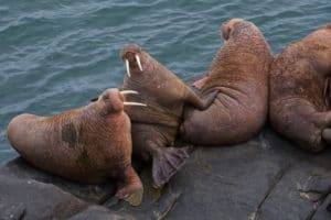Walrus Islands State Game Sanctuary