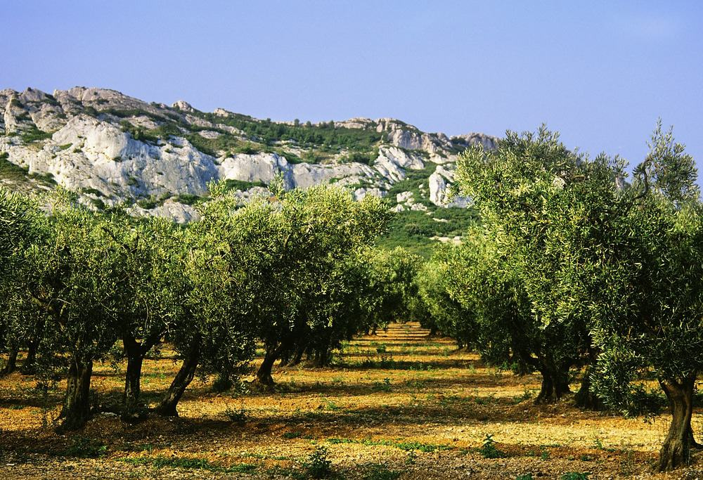 Alpilles Natural Preserve