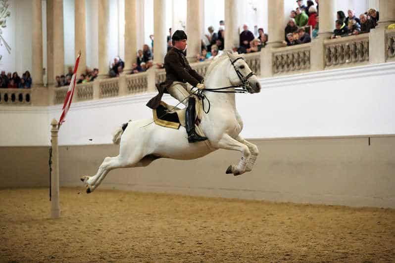 Performance Of The Lipizzans