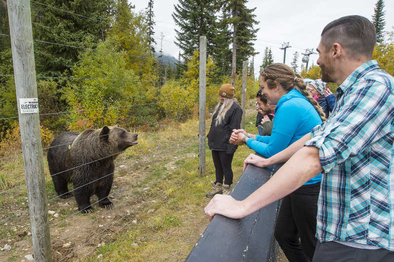 Grizzly Bear Refuge Tour