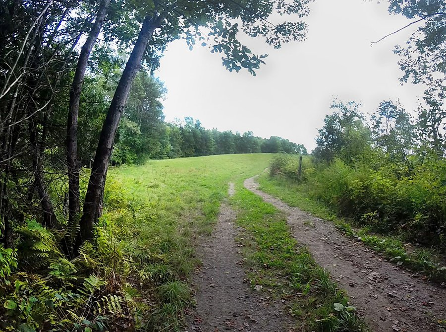 Yankee Woodlot Trail