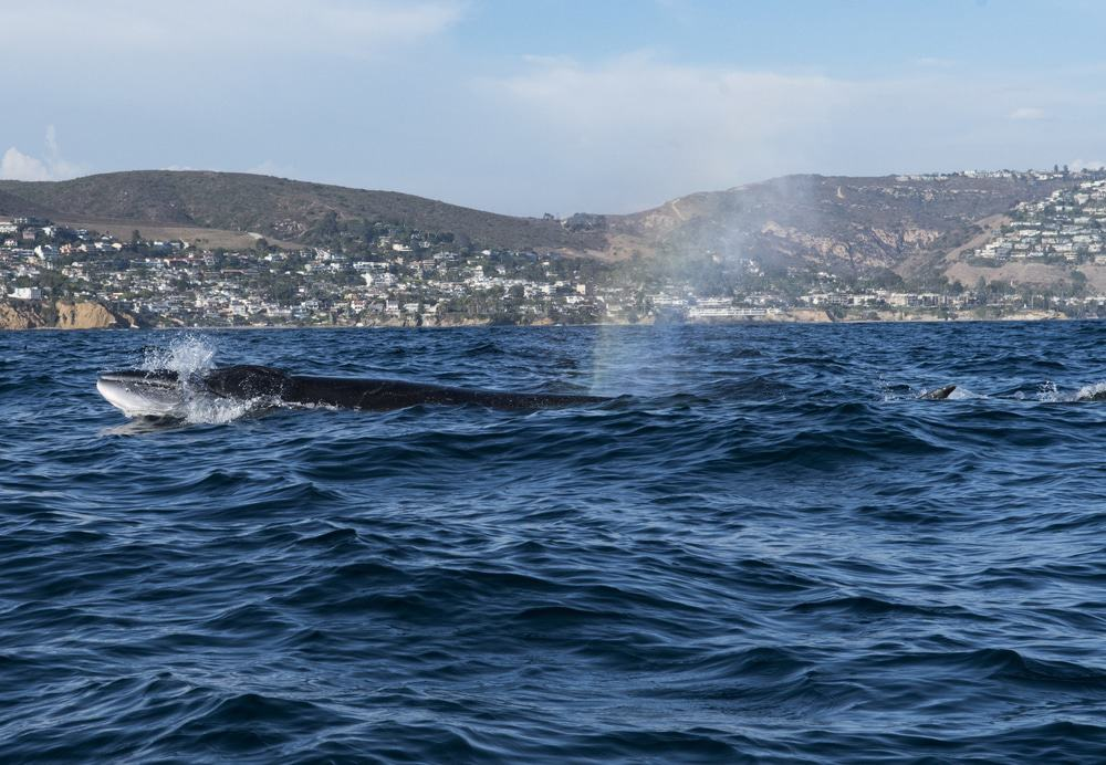Whale Watching Tour From Newport Harbor