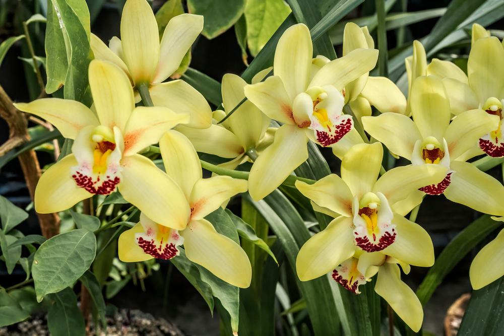 Mackay Orchid House