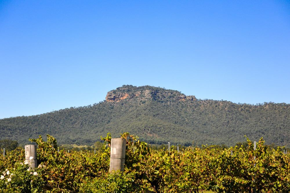 View To Werakata National Park From The Hunter Valley Vineyards