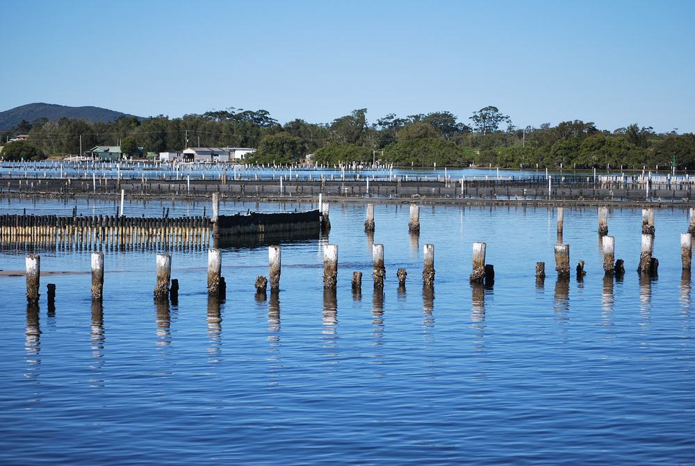 Oyster Farms In Forster-Tuncurry