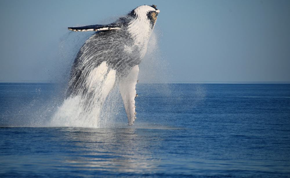 Whale Watching In Broome