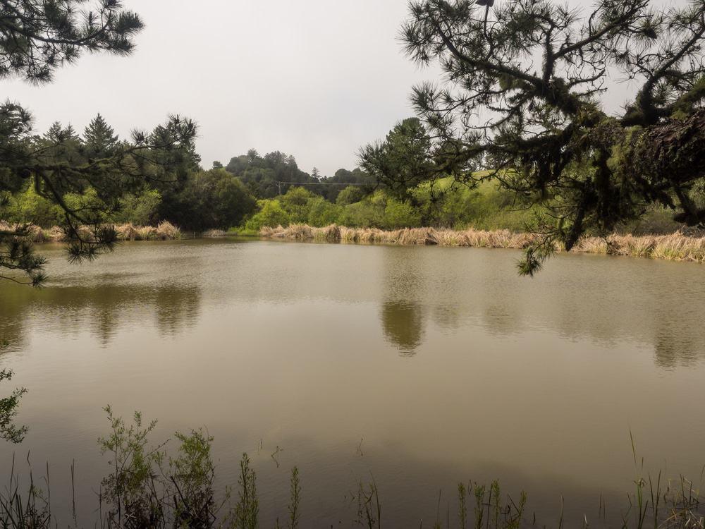 Overlooking Alpine Pond at Skyline Ridge Preserve
