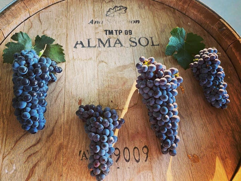 Alma Sol Winery