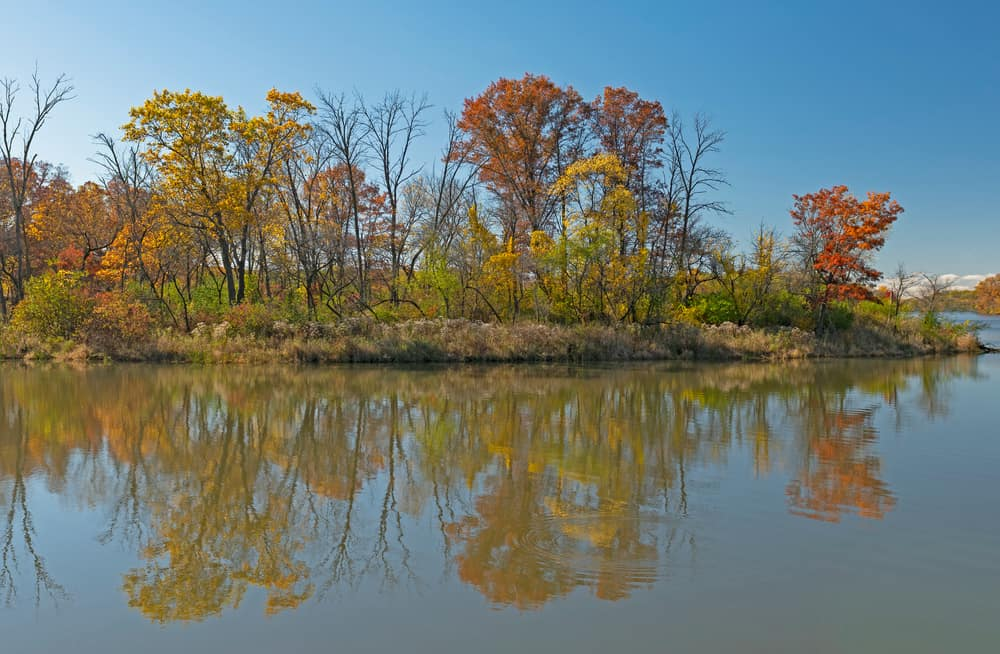 Ned Brown Forest Preserve